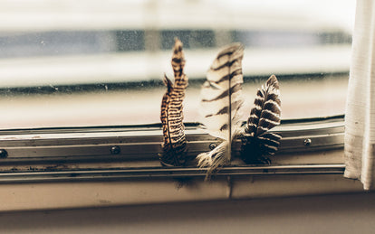 Three feathers stuck in the beading of a crusty old window.