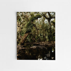 The Flooded Oak Hammock by Corey Woosley - featured image