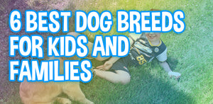 6 Best Dog Breeds For Kids and Families
