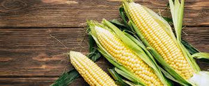 Stapleton Farms Sweet Corn 1 dozen