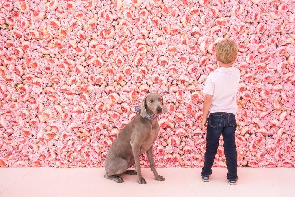 Boy and his dog in front of Flower Vault pink peonies.