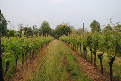 La Torre Vineyard in Mocasina di Calvagese