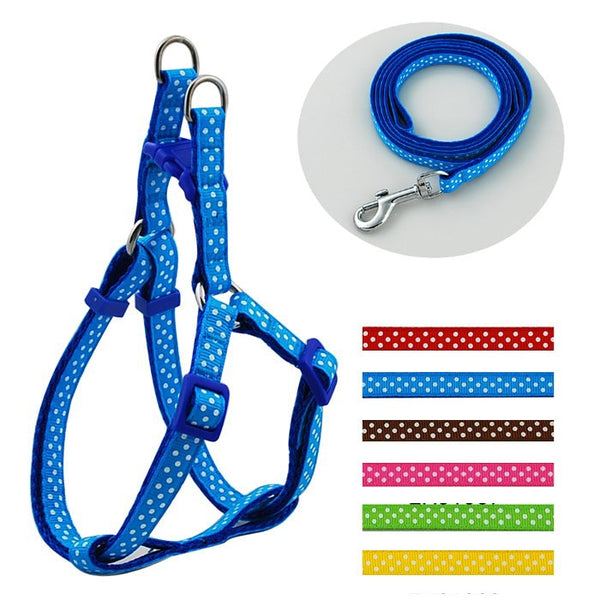 A Popular Dog Harness & Leash Set at a Very Low Price