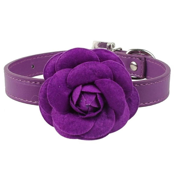 Leather Dog Collar Desined with a Flower For Small Dogs