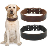 Real Leather Dog's Collar For  Medium & Large Dogs
