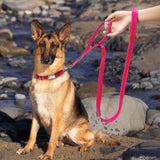 A Beautiful Collar and Leash Set With a Soft Handle for Small, Medium and Large Dogs, at a Low Price
