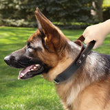Genuine Leather Dog Collar With Quick Control Handle Suitable for Training Medium & Large Dogs Such as a Pitbull, Etc.
