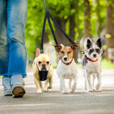 3 Way Dog Leash for up to Three Dogs