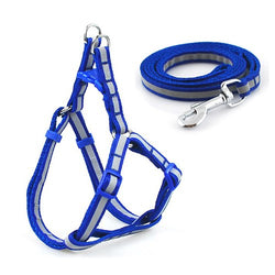 A Popular Dog Harness & Leash Set at a Very Low Price, for Small Dogs