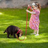 Small Dog Leash at an Especially Low Price