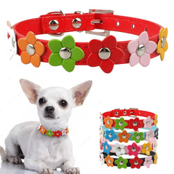 A Cutely Designed Leather Collar with Flowers for Puppies & Small Dogs