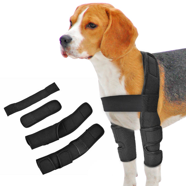 A Special Knee Brace for Dogs
