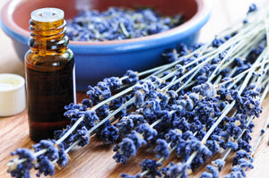 bottle of essential oil and bundle of lavender flowers