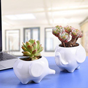 Ceramic Planter Tiny Flower Plant Container