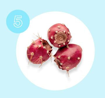 Prickly Pear oil high in essential fatty acids, which naturally stimulate collagen production.