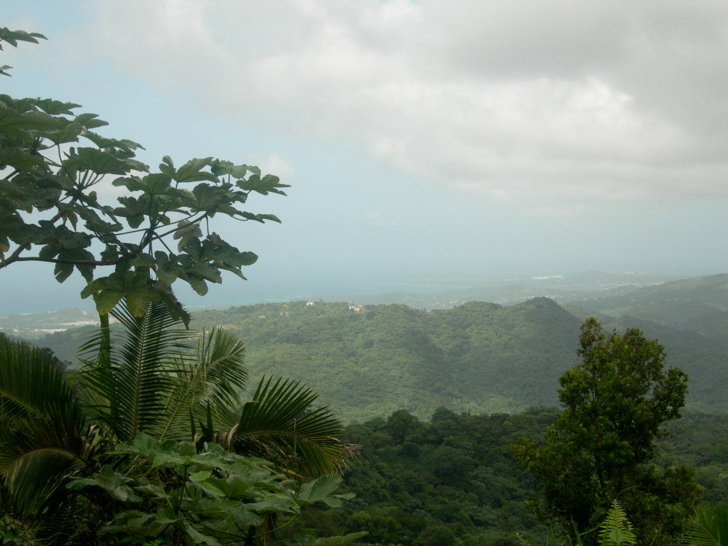 The northern coast of Puerto Rico, as seen from El Yunque in the island's center.