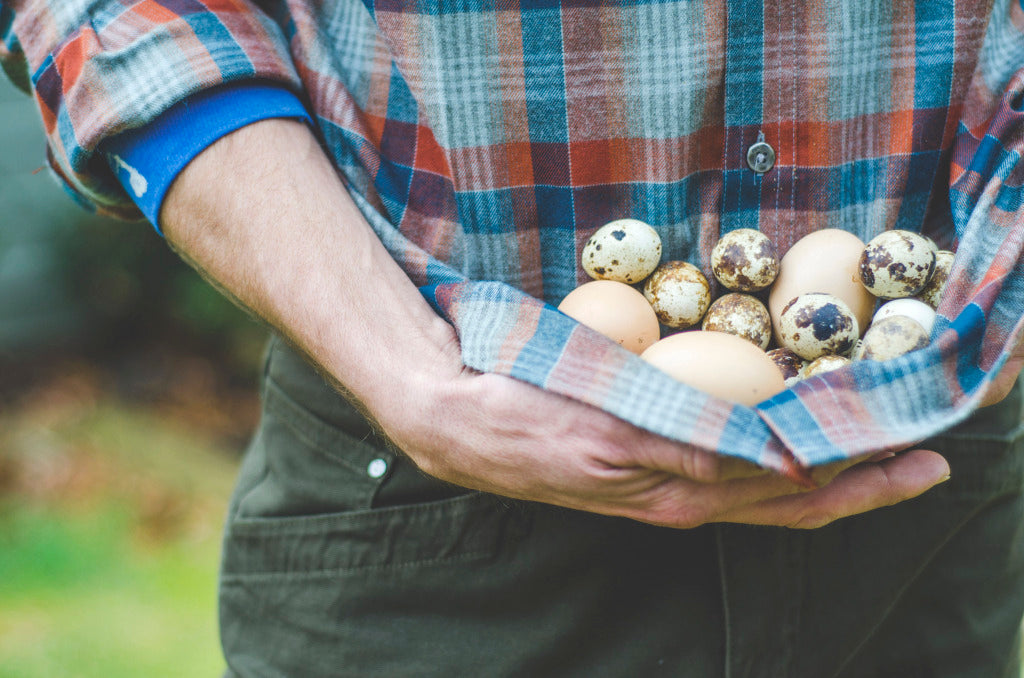 Assortment of chicken and quail eggs