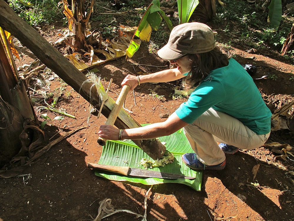 Removing the pulp from a false banana (or ensete) plant to make a pancake snack.