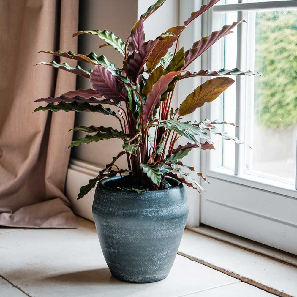 Seia Granite Planter Indoor Plant Pot