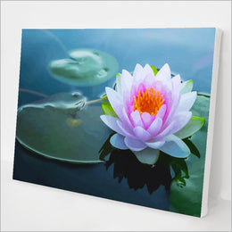 Water Lily kit