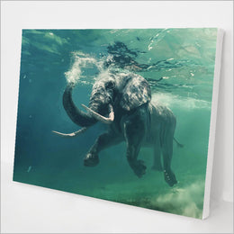 Swimming Elephant kit