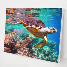 Coral and Sea Turtle kit