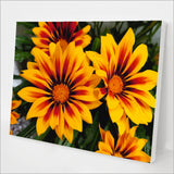 Blanket Flower kit