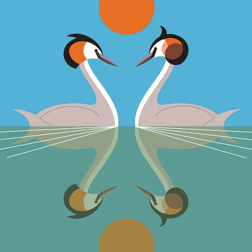 Great Crested Grebe  Card - I like Birds