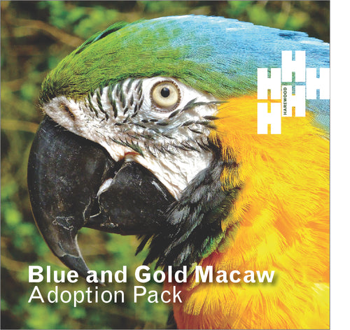 Adopt a Harewood Blue & Gold Macaw (Digital Gift)
