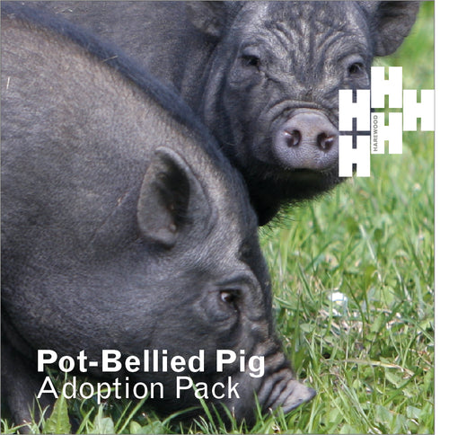 Adopt a Harewood Pot Bellied Pig (Digital Gift)