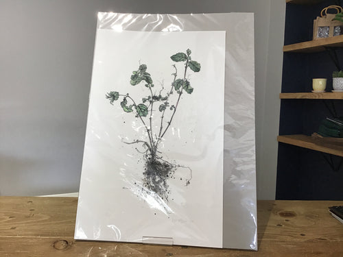 Mintze by Kate McGuire - Limited Edition Print