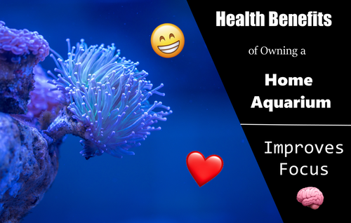 Aquariums Naturally Improve Focus