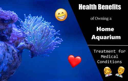Aquariums can Act as a Partial Treatment for Medical Conditions