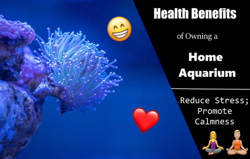 Aquariums Reduce Stress and Anxiety, and Promote Calmness