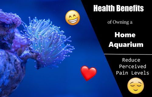 Aquariums can Reduce Perceived Pain Levels