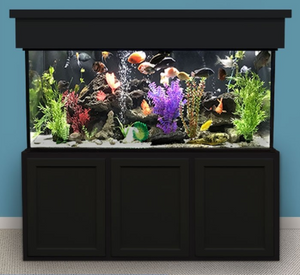 Custom LIFETIME 240 gal. Glass Aquarium Tank