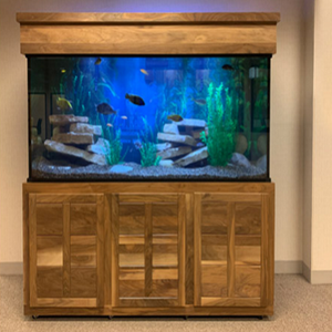 Custom LIFETIME 150 gal. Glass Aquarium Tank