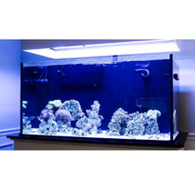 Custom LIFETIME 110 gal. Glass Aquarium Tank