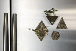 Marbled Air Plant Magnet Triangle