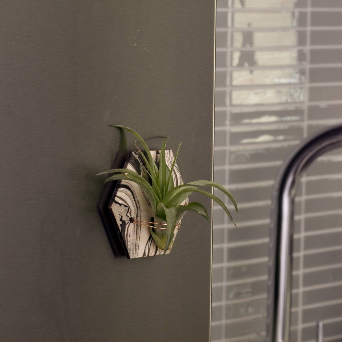 Marbled Air Plant Magnet Hexagon