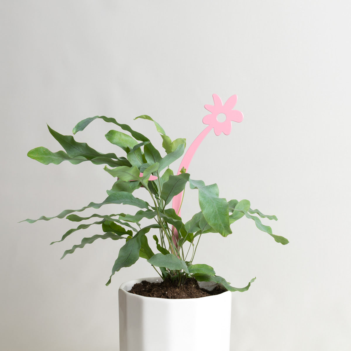 May Flowers Plant Support Stake Pink