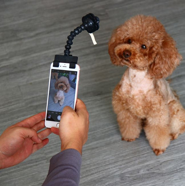 PetPerfect™ Pet Selfie Stick - 50% OFF Today Only