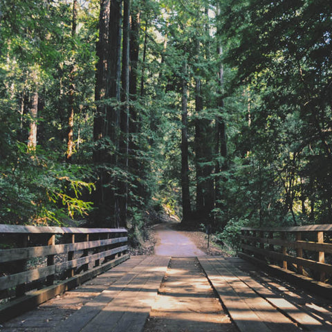 ATTITUDE Living how walking in the forest improves health