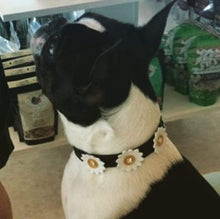 Load image into Gallery viewer, Maci Leather Flower Collar with Swarovski Crystal on Flower - Around The Collar NY