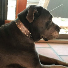 Load image into Gallery viewer, Callie Crystal Cluster Wider Leather Dog Collar - Around The Collar NY