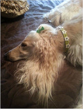 Load image into Gallery viewer, Ellie Flower Leather Dog Collar-Swarovski Crystals on Flower & Strap - Around The Collar NY