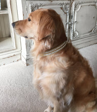 Load image into Gallery viewer, Ava Double Row Close Crystal Leather Dog Collar - Around The Collar NY