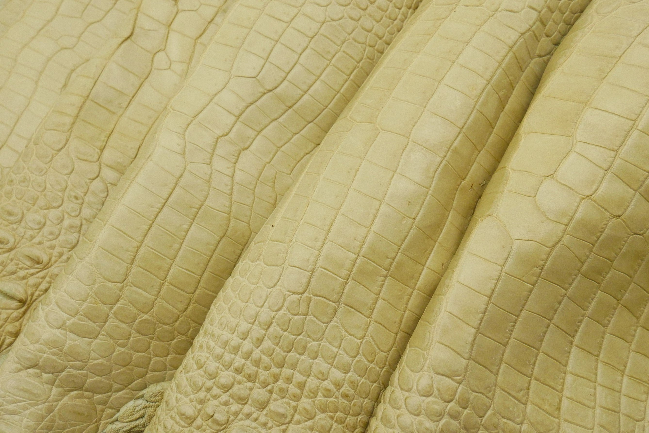 CROCODILE  - Cream/Beige