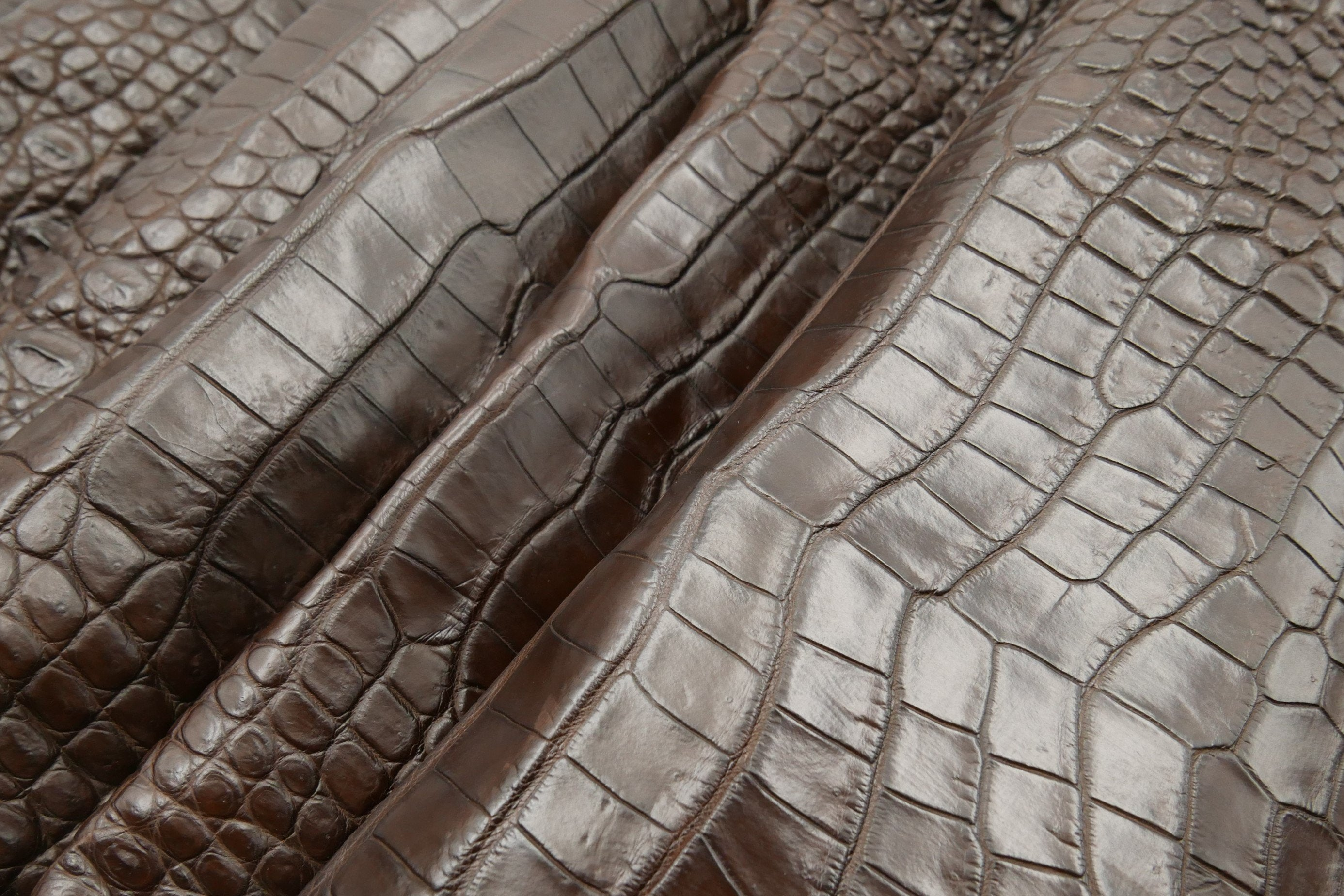 CROCODILE  - Dark Brown