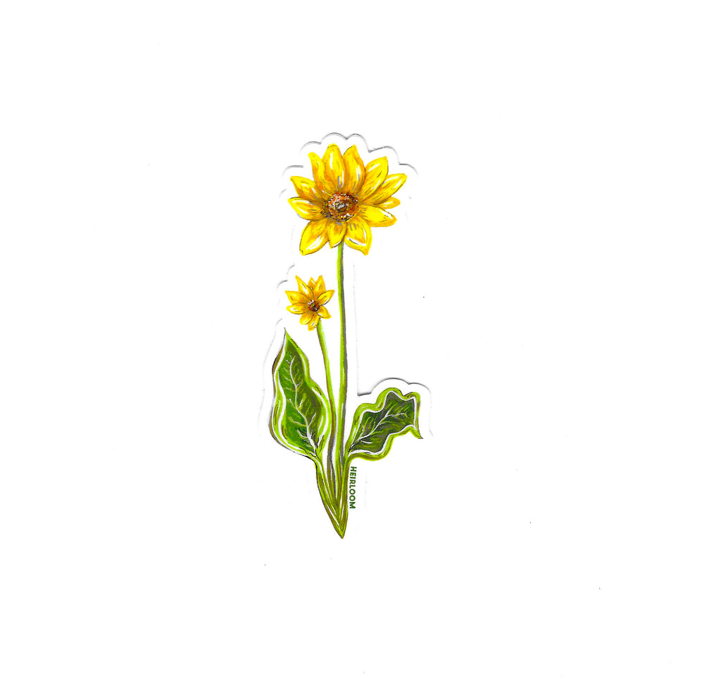 Balsamroot Wildflower Sticker | Vinyl Art Decal